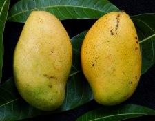 Фото: фрукт Манго